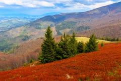 Horizontal de montagne dans Carpathiens Photos libres de droits