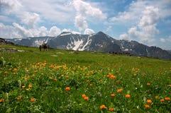 Horizontal de montagnes Image libre de droits