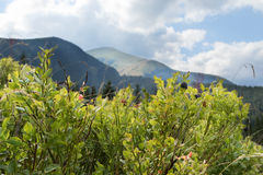 Horizontal de montagnes photographie stock