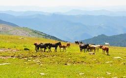 Horizontal de montagnes d'été photographie stock