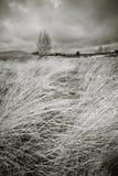 Horizontal de Moorland dans b/w Photographie stock libre de droits