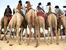 Horizontal de nómadas en camellos en el festival del desierto Imágenes de archivo libres de regalías