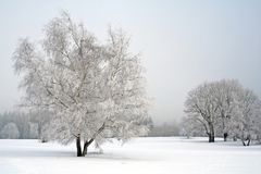 Horizontal de neige Photo stock