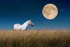 Horizontal de nuit avec des chevaux à la lune Photographie stock libre de droits