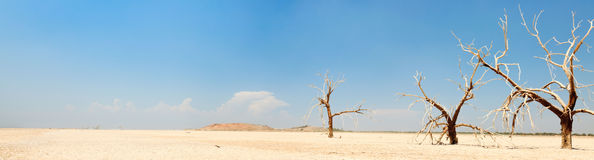 Horizontal de panorama des arbres morts. Photo libre de droits