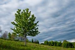 Horizontal de printemps Photographie stock