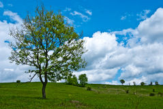 Horizontal de printemps Image stock