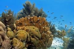 Horizontal de récif coralien photographie stock