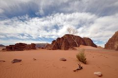 Horizontal de rhum de Wadi (grand-angulaire) Image libre de droits