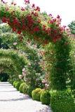 Horizontal de roseraie Image libre de droits
