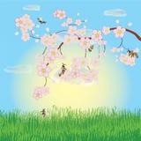 Horizontal de source avec la cerise de floraison Photos stock