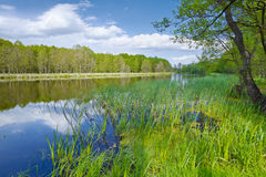 Horizontal de source Drapeau doux en rivière de Narew images libres de droits