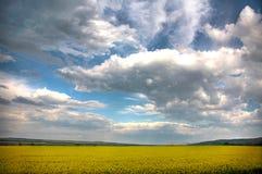 Horizontal de source et le ciel nuageux. Images stock