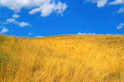 Horizontal de steppe Image libre de droits