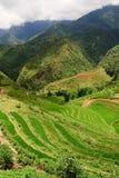 Horizontal de terrasse de riz Photos libres de droits