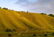 Horizontal de vache Image libre de droits