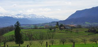 Horizontal de vigne Photographie stock libre de droits