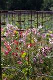 Horizontal de vigne Images stock