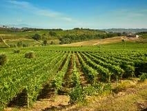 Horizontal de vigne Photo stock