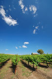 Horizontal de vigne Images libres de droits