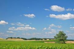 Horizontal de vigne Photo libre de droits