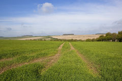 Horizontal de wolds de Yorkshire Photographie stock libre de droits