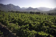 Horizontal des établissements vinicoles Images stock