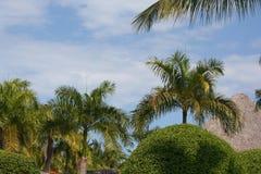Horizontal des arbres tropicaux Photo libre de droits