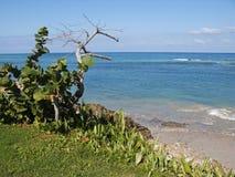 Horizontal des Caraïbes de plage image libre de droits