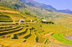 Horizontal des collectes de riz de Sapa images stock
