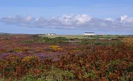 Horizontal des fermes, des fleurs et du ciel bleu Image libre de droits
