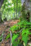 Horizontal en bois sauvage Photographie stock libre de droits