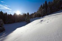 Horizontal ensoleillé de l'hiver photographie stock libre de droits