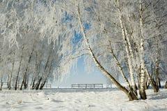 Horizontal et arbres de l'hiver photographie stock