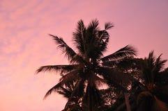 Horizontal exotique Image stock