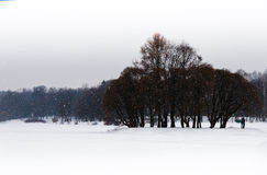 Horizontal falling snow in winter park. Background backdrop Royalty Free Stock Photography