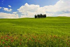 Horizontal fleuri Photo libre de droits
