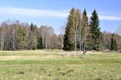 Horizontal footpath. With many tree on horizont Royalty Free Stock Photos