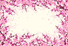 Horizontal Frame with Plum Blossom Branches. Spring background with flowering tree branches and flying petals. Rectangle horizontal frame with pink plum blossom vector illustration