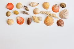 Horizontal frame with sea shells and corals on white background. Royalty Free Stock Photos