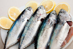 Horizontal fresh mediterranean mackerels Royalty Free Stock Photo