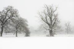 Horizontal froid de l'hiver Photo stock