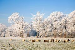 Horizontal gelé Images libres de droits