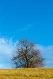 Horizontal gentil d'automne avec l'arbre image stock
