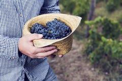 Horizontal Grapes Hat Syrah Man Hands Royalty Free Stock Images
