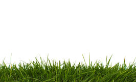 Horizontal grass. Royalty Free Stock Photo