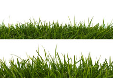 Horizontal grass Stock Photography