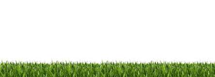 Horizontal grass border Royalty Free Stock Photo