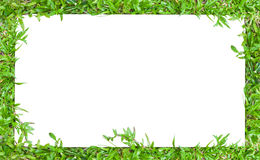 Horizontal grass border frame. Horizontal image frame in green grass border style.To use with horizontal or landscape image royalty free stock photos
