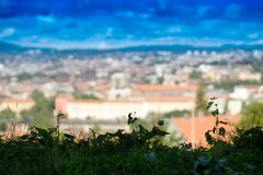 Horizontal green grass with Oslo city bokeh background Stock Images